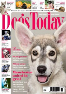 dogs-today